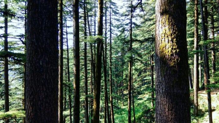 canyon forest cannes tendances activité enfant activité cannes activité nice activité pleine air canyon forest villeneuve loubet