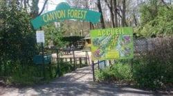 canyon forest cannes tendances activité enfant activité cannes activité nice activité pleine air villeneuve loubet